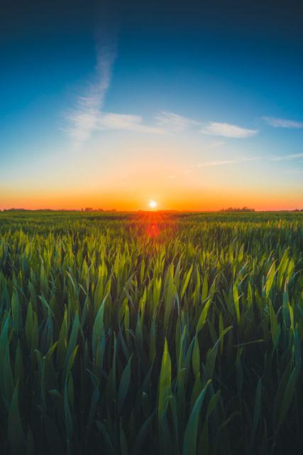 Serooskerke farm fields sunset