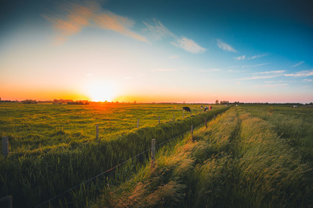 Serooskerke farm fields