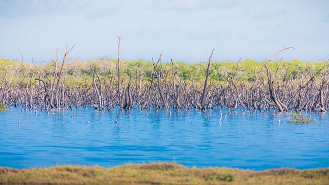 Mangroves Bonaire