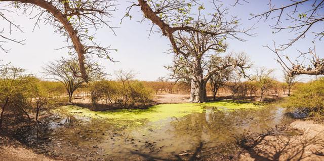 Senegal park