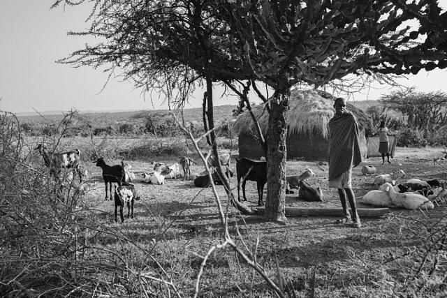Kenya - Lewasso, the Masai