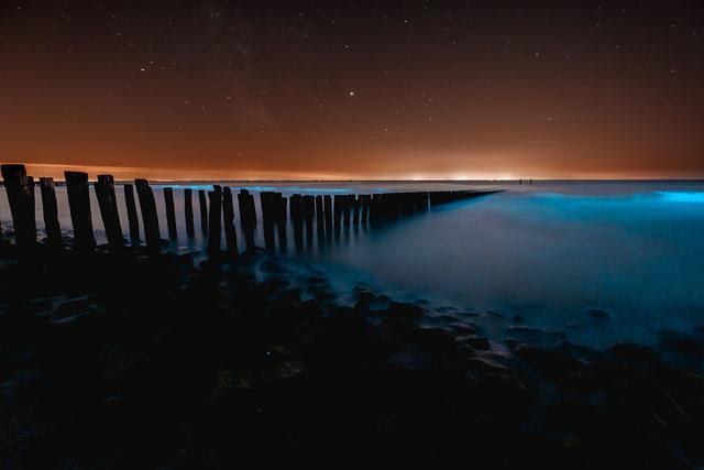 Sea sparkle - Noctiluca scintillans in Westkapelle